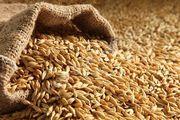 Предприятие ЗАКУПАЕТ зерновые культуры