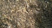 Закупка зерноотходы,  некондиция зерновых,  масличных,  бобовых