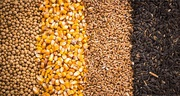 Куплю зерновые,  бобовые,  некондицию,  зерноотходы.