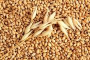 Куплю зернові,  бобові,  некондицію,  зерновідходи.