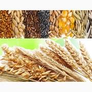 Закупаем отходы кукурузы,  пшеницы,  сои,  подсолнечника